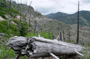 Planète - La destruction des végétaux menace les humains