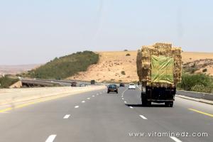 Période des moissons, le foin est en excès dans l'ouest algérien