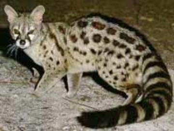 rencontre algerie chat