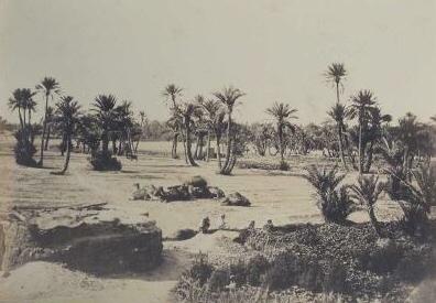 Palmiers et Tentes PHOTO ANCIENNE D\'ALGERIE  F�lix Jacques Antoine Moulin 1802 -1875