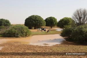 Naama - Une petite Oasis du coté de Gaaloul