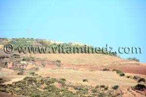 Terre agricole de 37 Hectares à Sidi Ouriache (Oulhassa) à vendre au lieu dit Zebboudja
