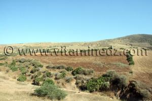 أرض فلاحية مساحة 37 هكتارا في سيدي ورياش (ولهاصة) للبيع في مكان يدعى زبوجة