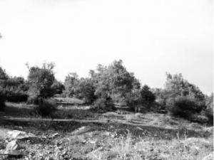 Filière oléicole à Skikda: Ça tarde encore à baigner dans l'huile