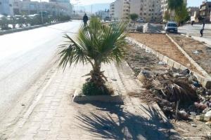 ARRÊT SUR IMAGE: Vu à Tébessa Plantation au milieu du trottoir