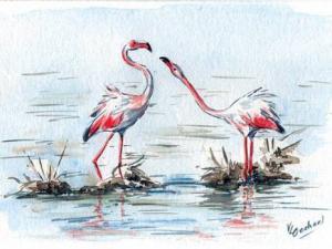 Batna - Moins d'oiseaux migrateurs dans nos contrées