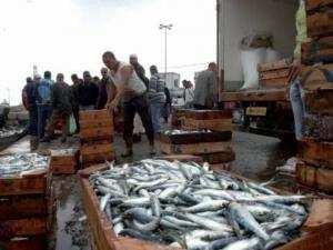 Baisse de la production halieutique à Jijel: La pollution cause d'importants dégâts