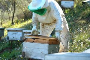 Boudouaou (Boumerdès) - Zineb Malouadjmi, apicultrice: «nous souffrons d'un marché désorganisé et notre miel n'est pas valorisé»