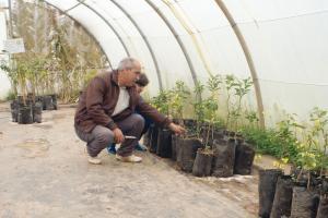 Oran - UNE NOUVELLE VARIÉTÉ A ÉTÉ CRÉÉE: Une labellisation pour sauver la clémentine de Messerghin