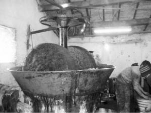Boumerdès - L'urgence de la modernisation de l'oléiculture
