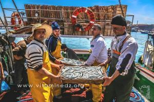 Sardines en abondance - Port de Pêche de Ghazaouet