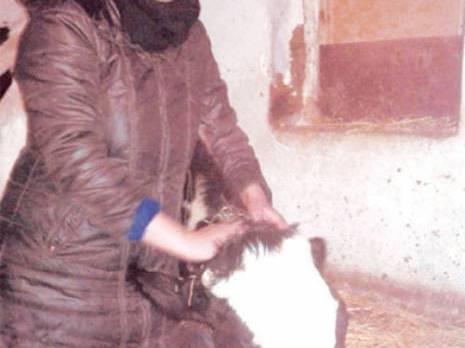 Ahmed Rachedi (Mila) - Portrait de Lamia Zebouchi . Eleveuse de vaches: Une femme qui a pris son destin en main
