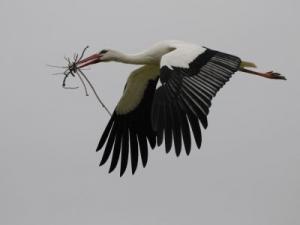 Aéroport international Rabah Bitat de Annaba: Les colonies de cigognes menacent les aéronefs