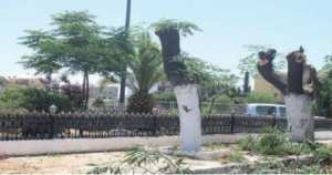 Sidi Bel Abb�s - Une association �cologique porte plainte pour mutilation d�arbres