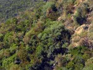 Skikda - Neuf morts et 28 blessés dans un accident de la circulation