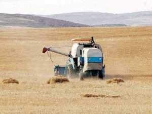Céréaliculture: Rendement désastreux à Tiaret