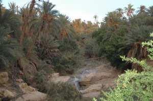 Négrine (Tébessa) - Menace sur les palmiers dattiers Problème d'eau pour l'irrigation