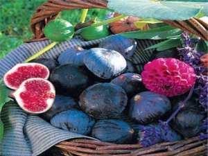 Première édition à Bordj Bou Arréridj: La figue de Djaâfra célébrée