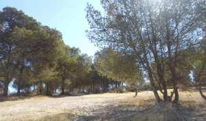 Forêt de Pin d'Alep