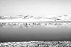 El Ménéa - Catastrophe écologique à Sebkhet El Maleh