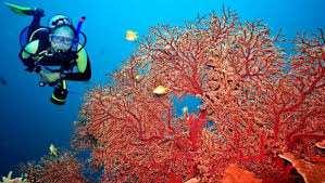Affaire du trafic de corail à Skikda: Deux à quatre ans de prison pour les 5 accusés