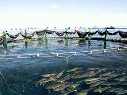 Une première à l'est du pays: Du loup de mer et de la dorade en élevage à Skikda