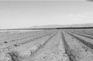 Chlef - Vers la récupération des terres agricoles abandonnées