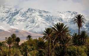 Mariage de palmiers, symbole de la chaleur et, de la neige, son opposée