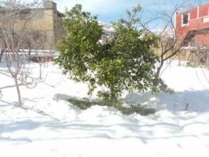 Neige à Lemroudj