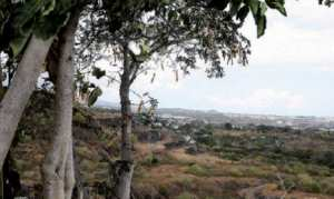 Mostaganem - Les vergers d'orangers menacés par la sécheresse