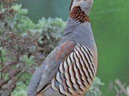 Mostaganem - La faune menacée d'extinction par l'usage des pesticides