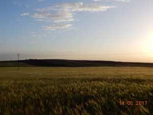 Le Sersou agricole.