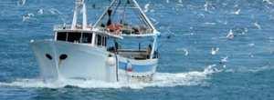 Mostaganem - Des pêcheurs dénoncent le massacre des ressources halieutiques