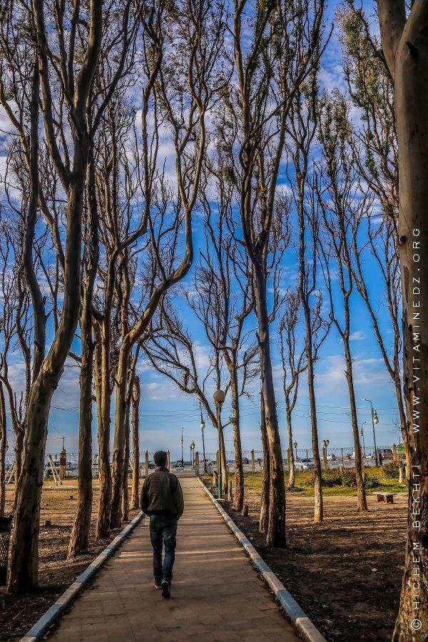 Petite foret d'Eucalyptus, Corso Plage (Boumerdes)