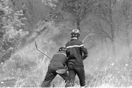 Tizi Ouzou - 113.000 oliviers détruits par les incendies