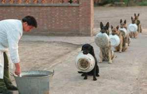 Des chiens faisant la queue