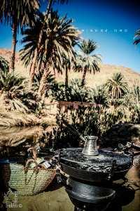 Les Oasis de Moghrar et Tiout