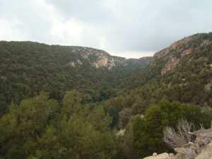 غابة العذراء