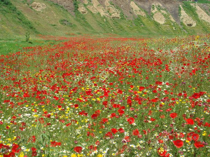 un tapis de fleurs