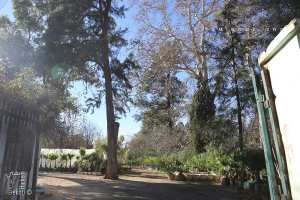 Le jardin de la pépinière de Tlemcen