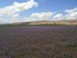Yabous est bien connu pour la beauté de ses fleurs. Au printemps.