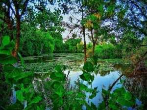Bonjour, d'#El_Kala #Lac_Tonga #El_Taref..!