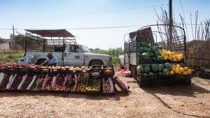 بيع الخضار والفواكه