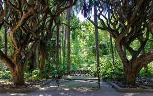 حديقة في الجزائر
