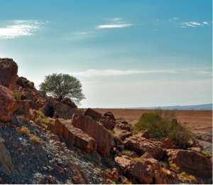 Découverte d'ossements fossiles de trois animaux à Djelfa... !