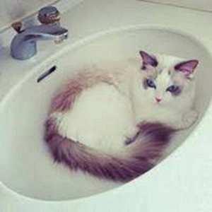 la princesse des chats