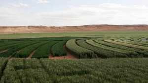 Agriculture Saharienne à Hassi Lefhel