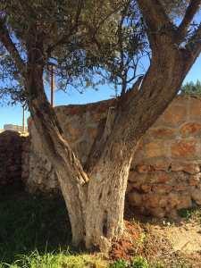 Ain Tagourait