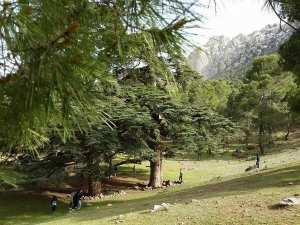Un site paradisiaque au pied de l'Ouarsenis... !