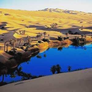 An Oasis in the Algerian Sahara #algérie